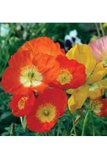 Seeds - Poppy Iceland Nudicaule Blend