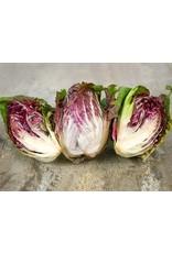 Seeds - Radicchio Palla Rossa Organic