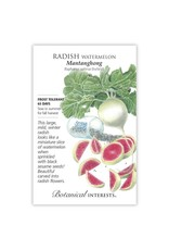 Seeds - Radish Watermelon Hybrid