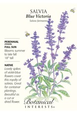 Seeds - Salvia Blue Victoria