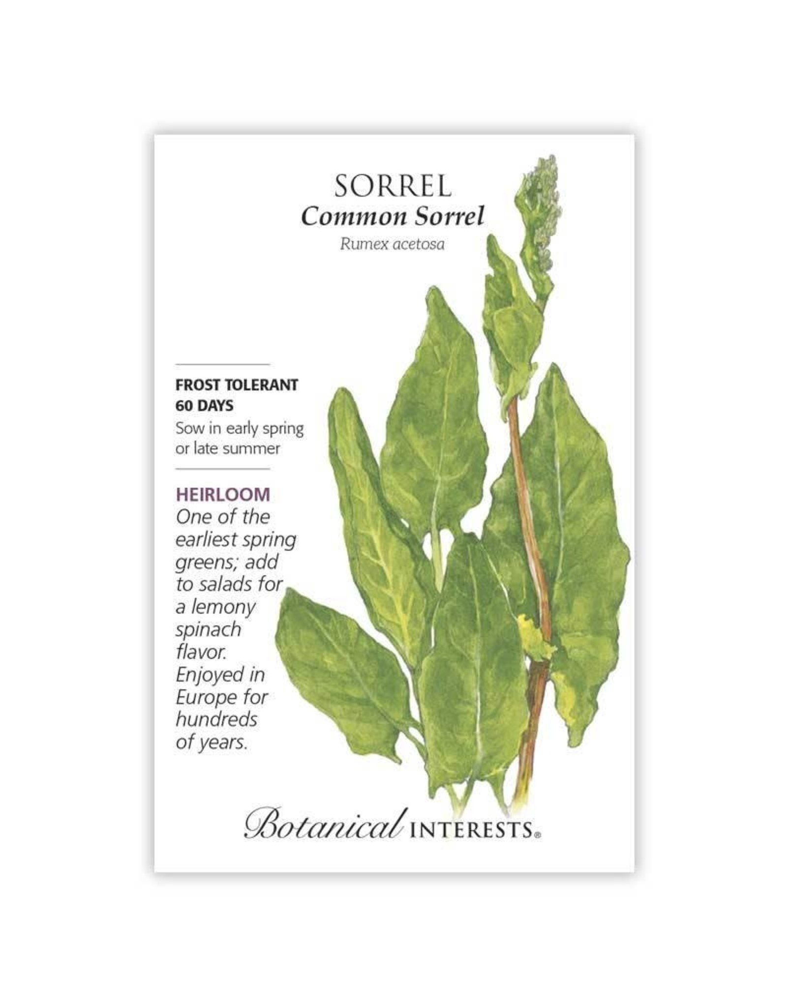 Seeds - Sorrel Common
