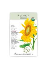 Seeds - Sunflower Mammoth Organic