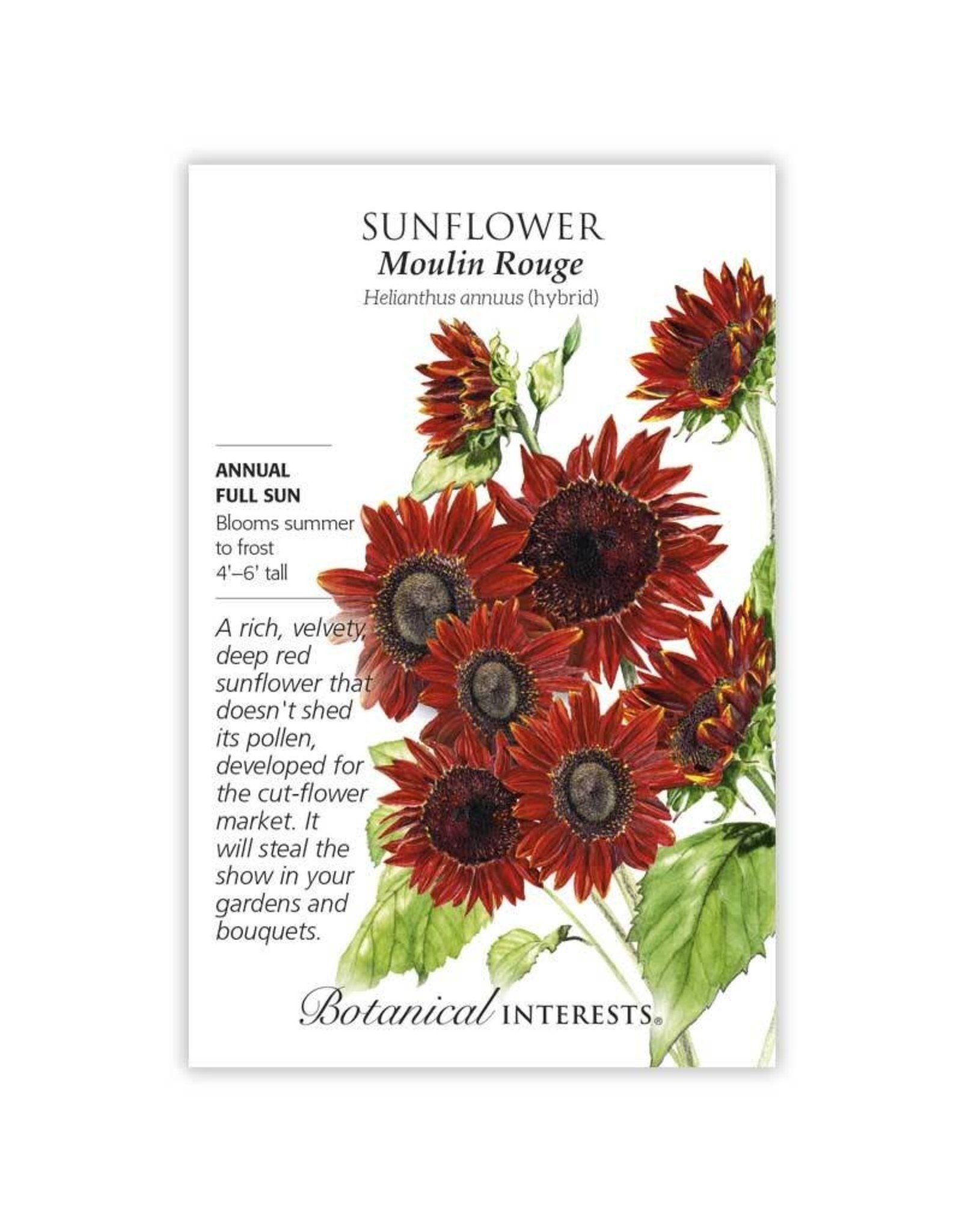 Seeds - Sunflower Moulin Rouge Hybrid