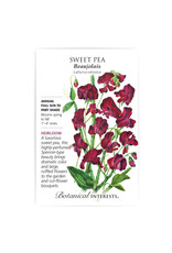 Seeds - Sweet Pea Beaujolais