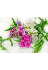 Seeds - Sweet Pea Perennial Blend