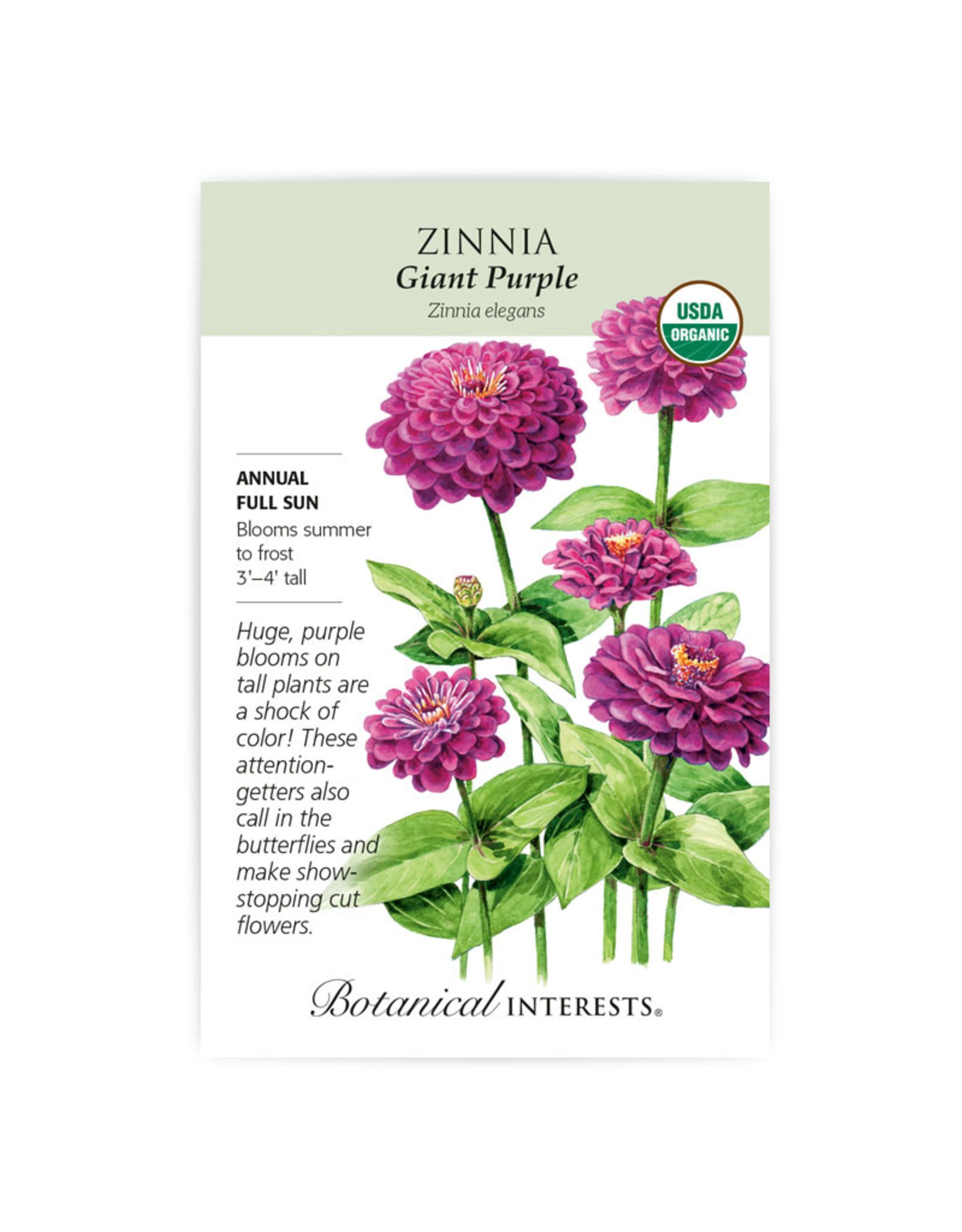 Seeds - Zinnia Giant Purple Organic