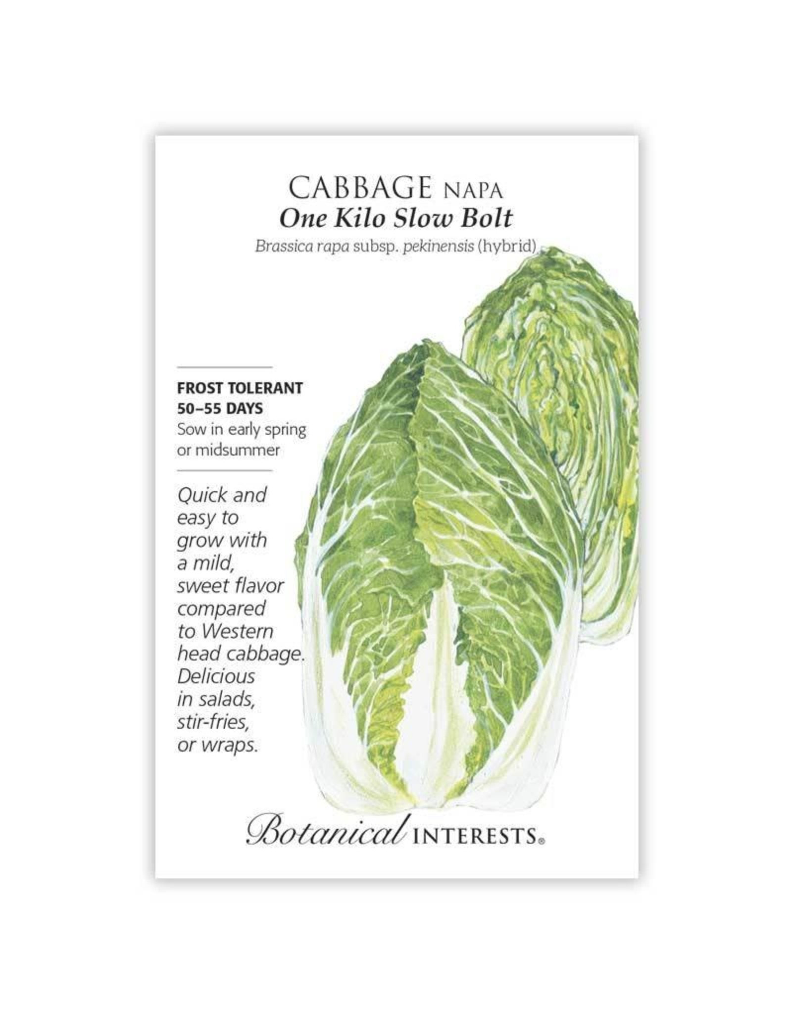 Seeds - Cabbage Napa One Kilo Hybrid
