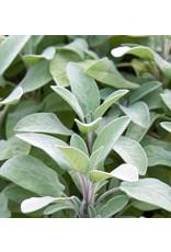 """Herb - Sage Berggarten - 4"""""""
