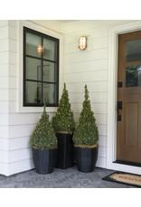 Spruce, Dwarf Alberta - Picea Glauca 'Conica' 5 Gallon