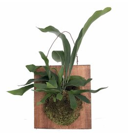 Staghorn Fern Mounted Plaque - 12""