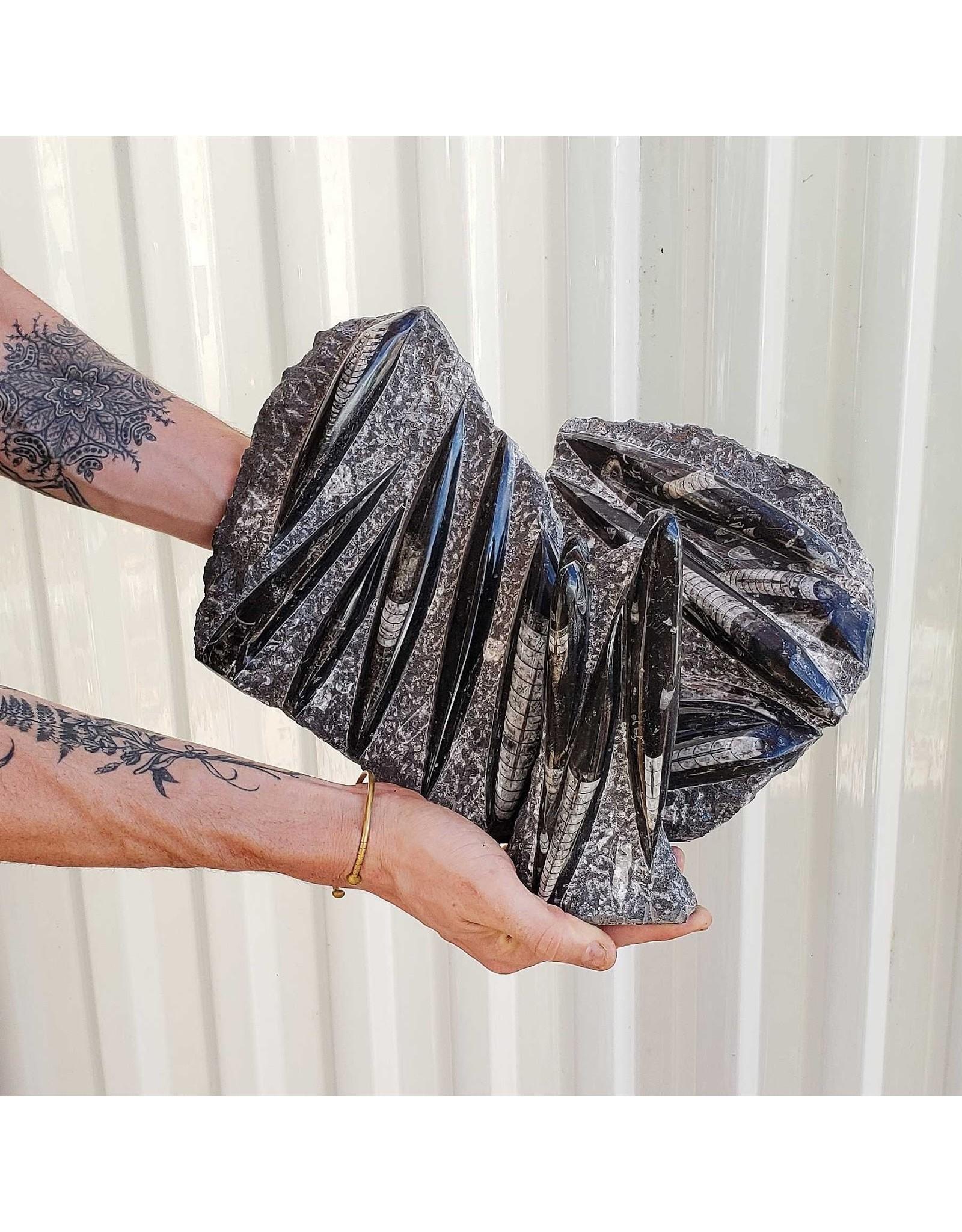 Medium Orthoceras Fossil Slab