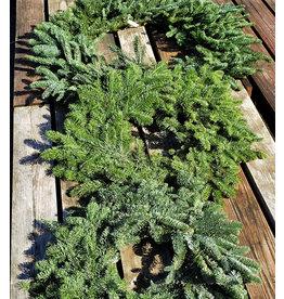 """Holiday Wreath - Noble Fir - 24"""""""