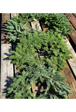 Holiday Wreath - Noble Fir - 28""