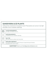 """Snake Plant - Sansevieria Trifasciata 'White Owl' 6"""""""