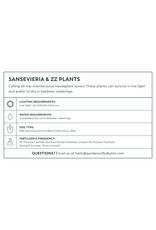 Snake Plant - Sansevieria trifasciata 'Laurentii'