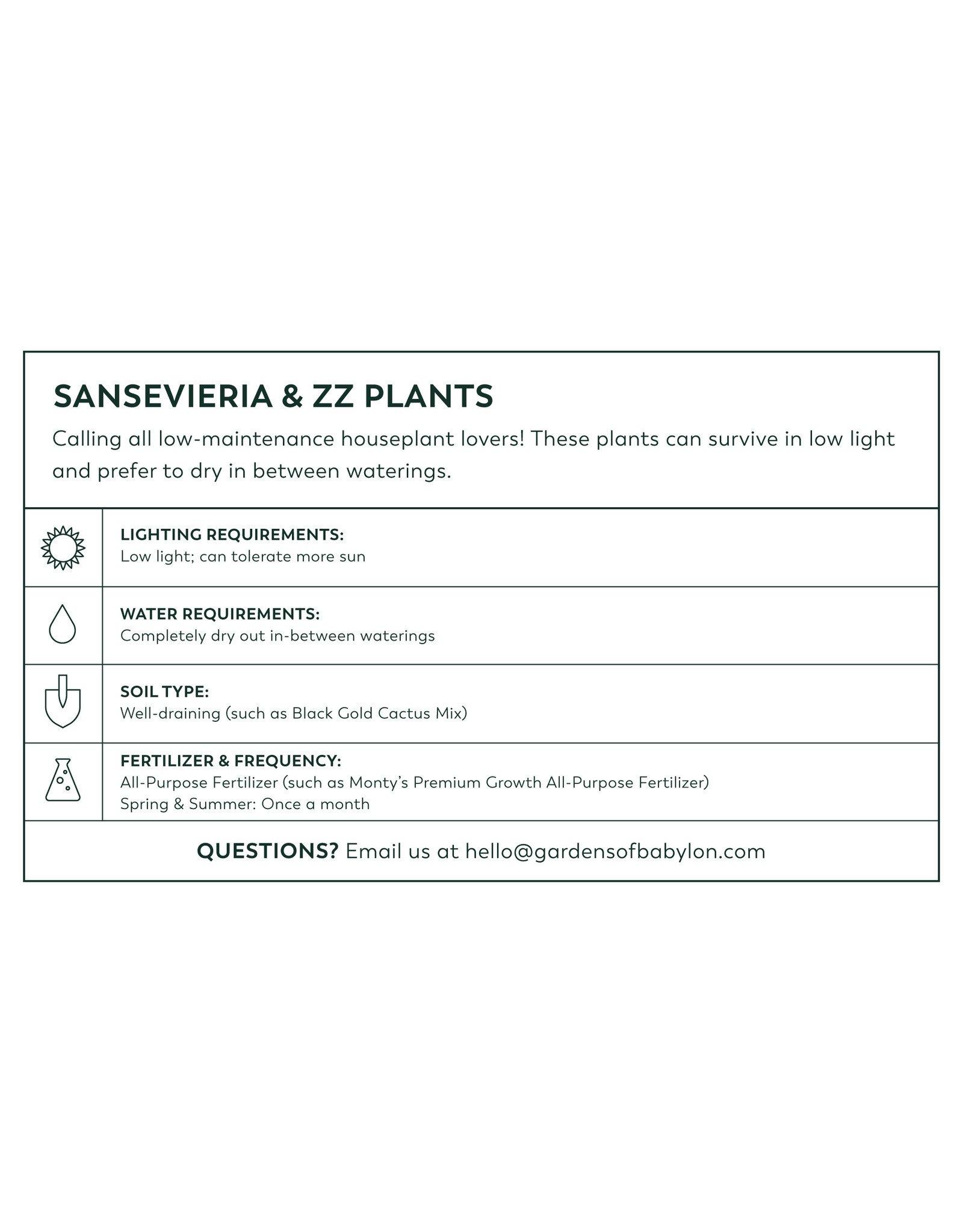 Snake Plant - Sansevieria trifasciata 'Zeylanica'