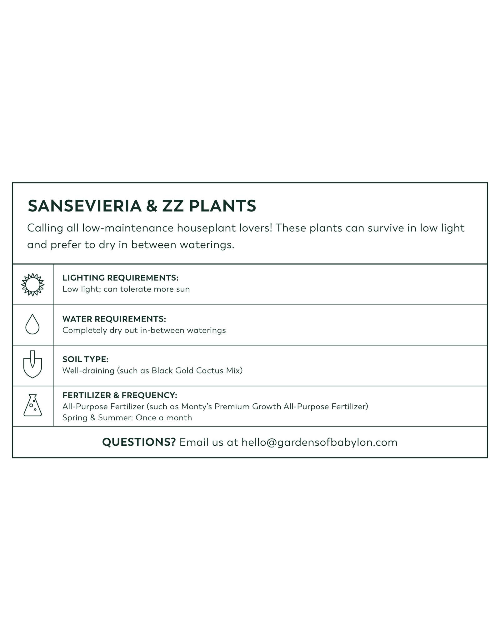 """ZZ Plant - Zamioculcas Zamifolia 10"""""""