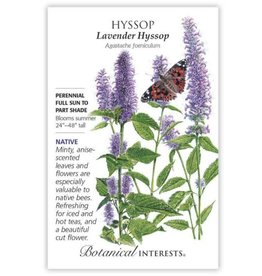 Seeds - Hyssop Anise