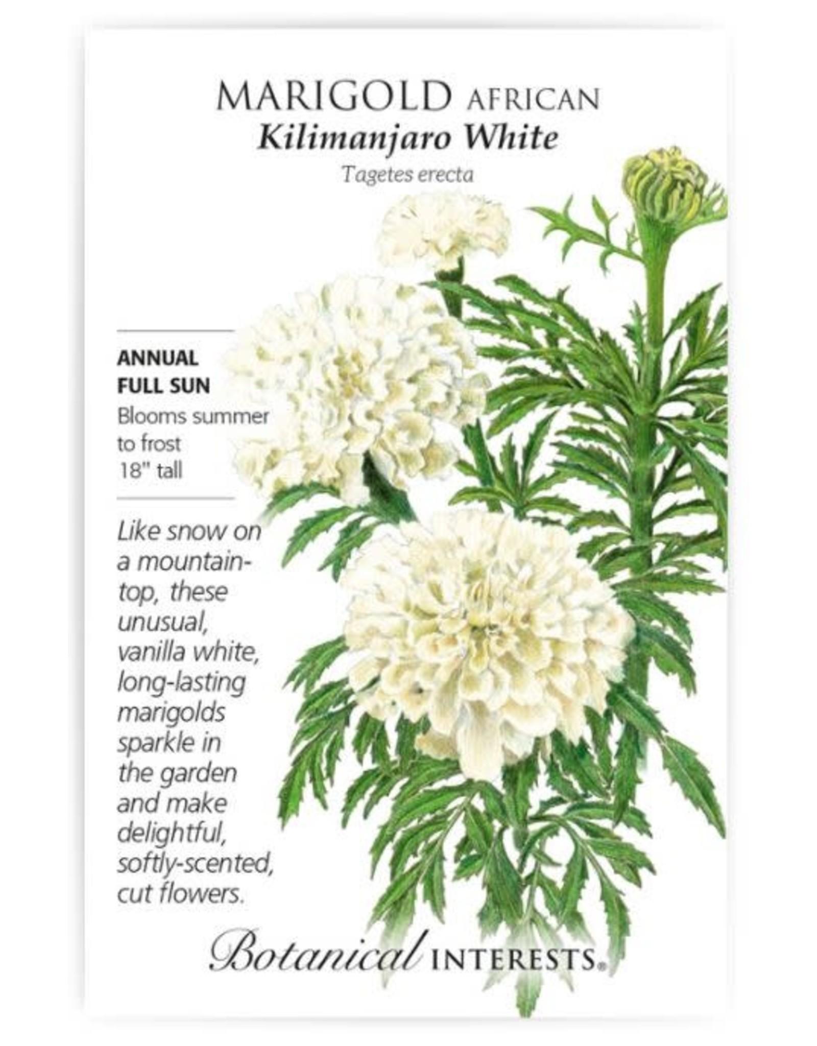 Seeds - Marigold African Kilimanjaro White