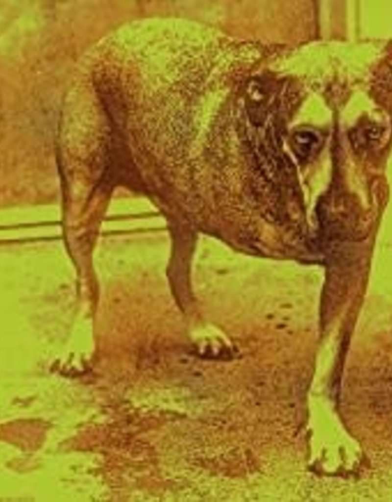 Used CD Alice In Chains- Alice In Chains