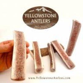 Yellowstone Antlers Antler Yellowstone SM Split 13.99