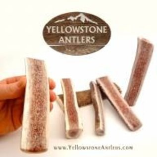 Yellowstone Antlers Antler Yellowstone SM Split 13.99