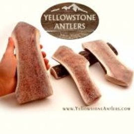 Yellowstone Antlers Antler Yellowstone LG Split 39.99
