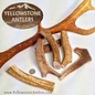 Yellowstone Antlers Antler Yellowstone MD 19.99