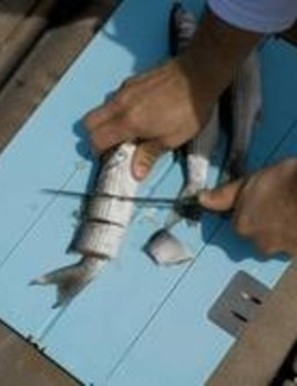 TOADFISH Toadfish Portable Cutting Board XL