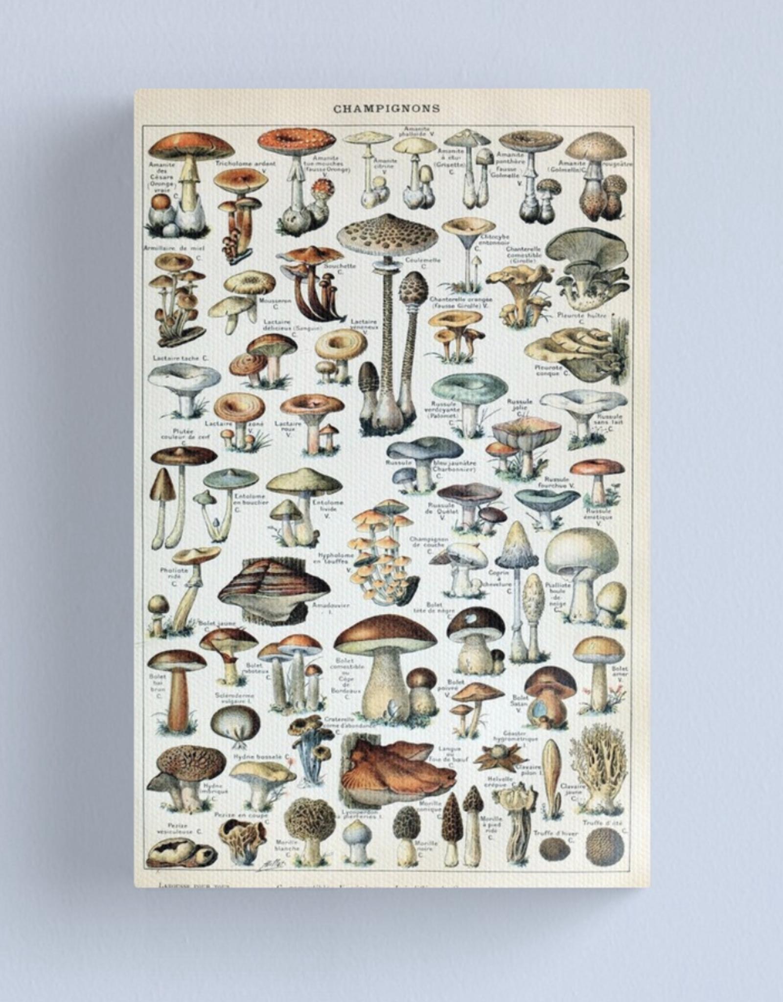 Vintage Edible Mushroom Chart Canvas - Medium