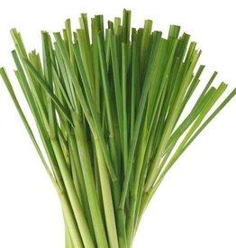 Lemongrass, Organic Essential Oil - 10mL