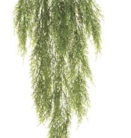 Green Hanging Bush