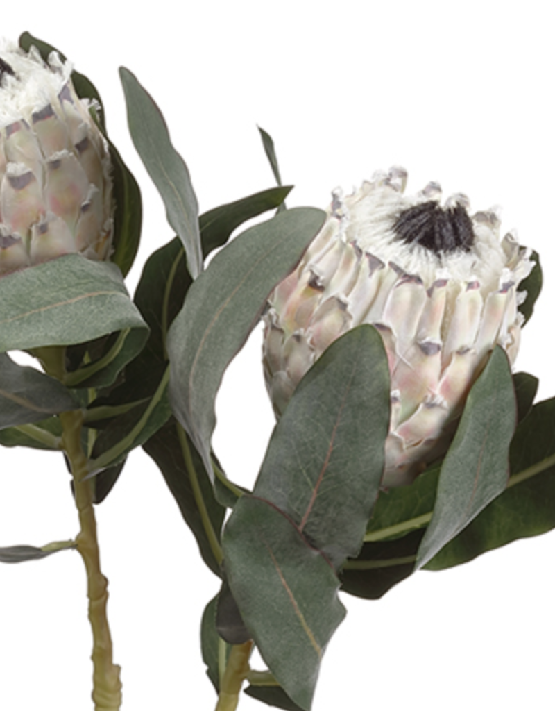 Protea Spray  Beige