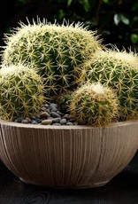 Barrel Cactus Pick