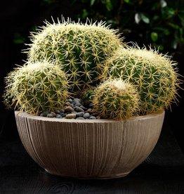 Barrel Cactus Pick