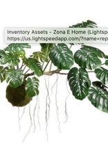 Monstera Hanging Plant