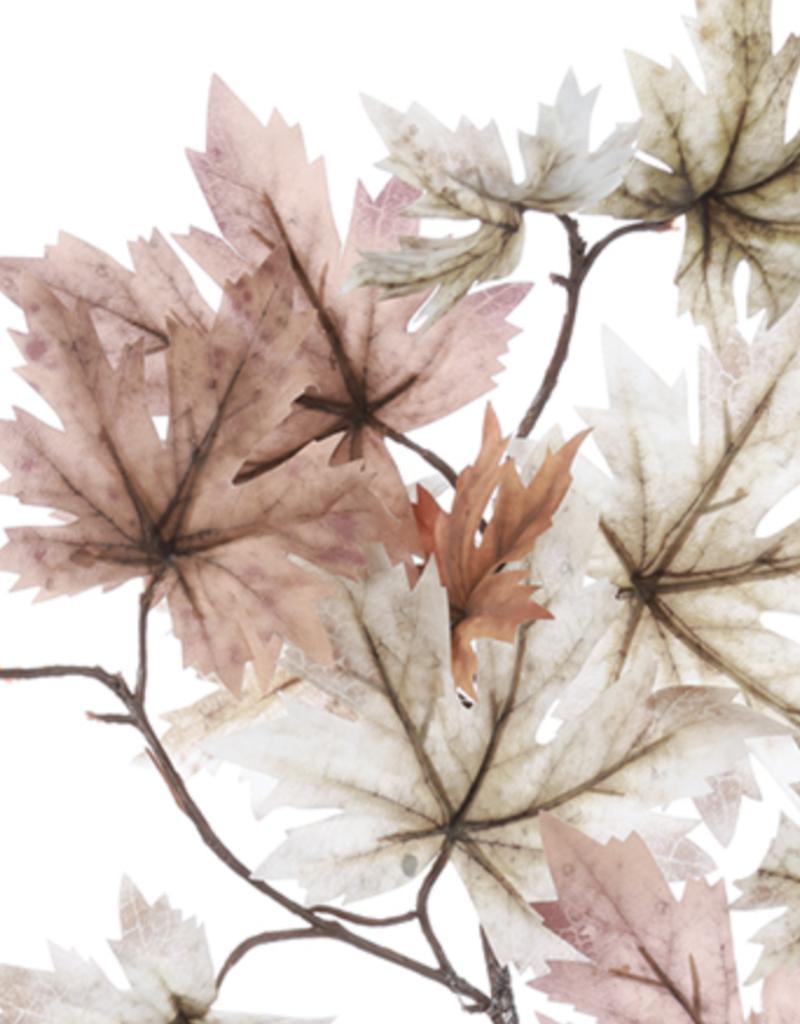 Maple Leaf Spray