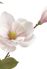 Magnolia Spray