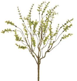 Mini Eucalyptus Bush