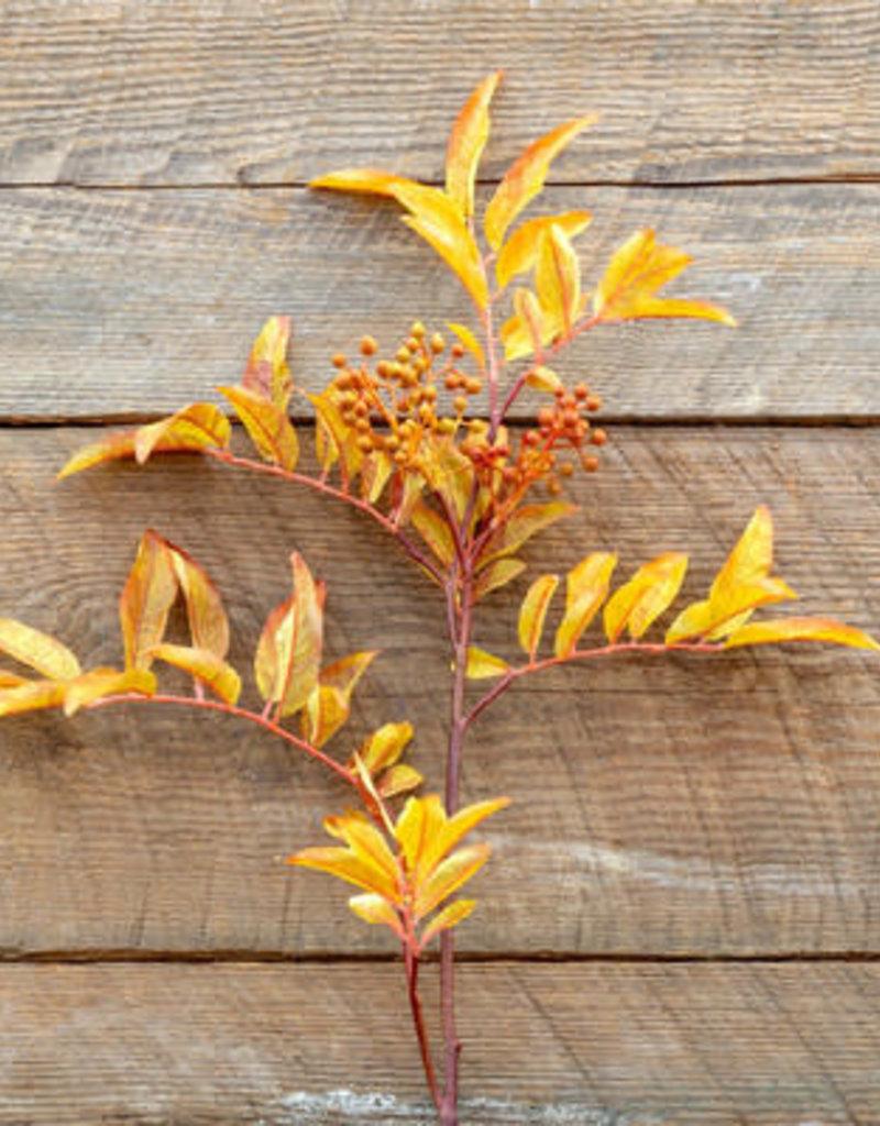 Autumn Sorbus Stem