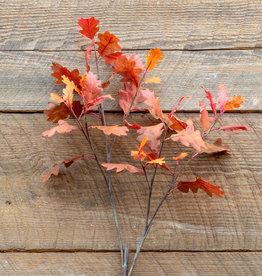 Texas Red Oak Stem