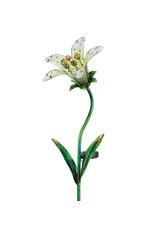 Solar Tiger Lily Stake - White