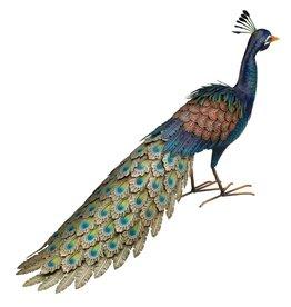 Peacock- Roamer