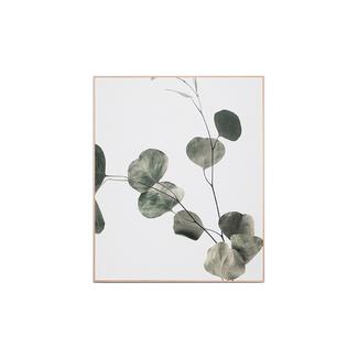 Eucalyptus Branch 2 - Framed Canvas