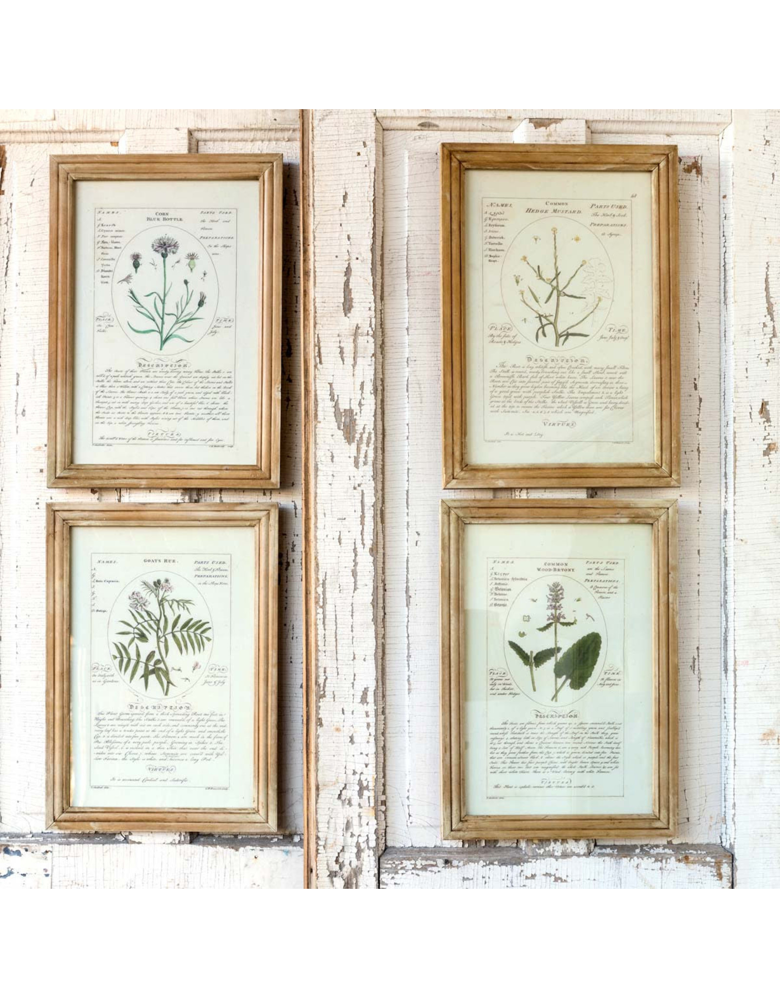 Botanical Framed Prints (Set of 4)