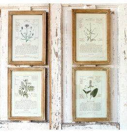 Botanical Framed Prints (Set of 4)