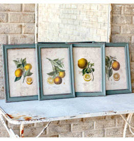 Citrus & Blossom Framed Prints (Set of 4)