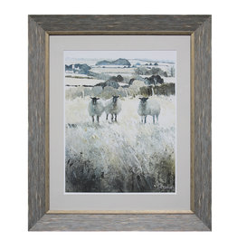 (W) Sheep in Meadow