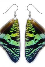 Asana Natural Arts Sunset Moth Top Wing Earrings, Resin - Asana Natural Arts