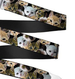 Buckle Down Belts Starburst Seatbelt Belt - Kitten Faces Scattered Black Webbing